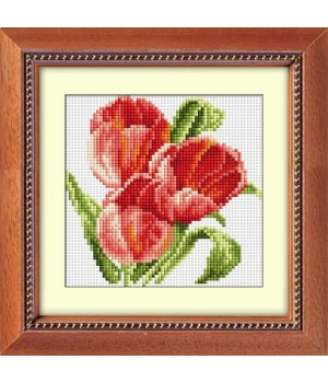 Три тюльпани